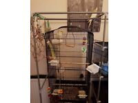 2 YOUNG WHITE/YELLOW COCKATIELS PLUS CAGE AND ACCESSORIES