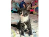 Kittens £80