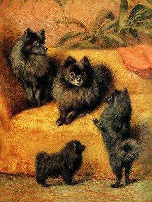 POMERANIAN CHARMING DOG GREETINGS NOTE CARD BEAUTIFUL BLACK POM MUM AND PUPPIES