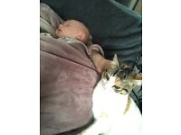 cat for rehoming (free)