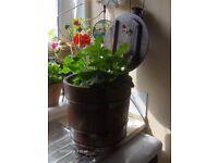 Victorian Mahogany Coal bucket with brass Bound