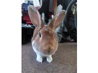 Rabbit boy 4 monts old