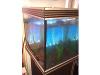 200ltr Fish tank complete coldwater setup