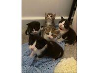 💕last kitten to reserve💕