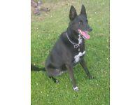 PRVATE DOG BOARDING the alternative to kennels