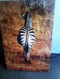 TRULY LOVELY LTD EDITION ZEBRA CANVAS PRINT