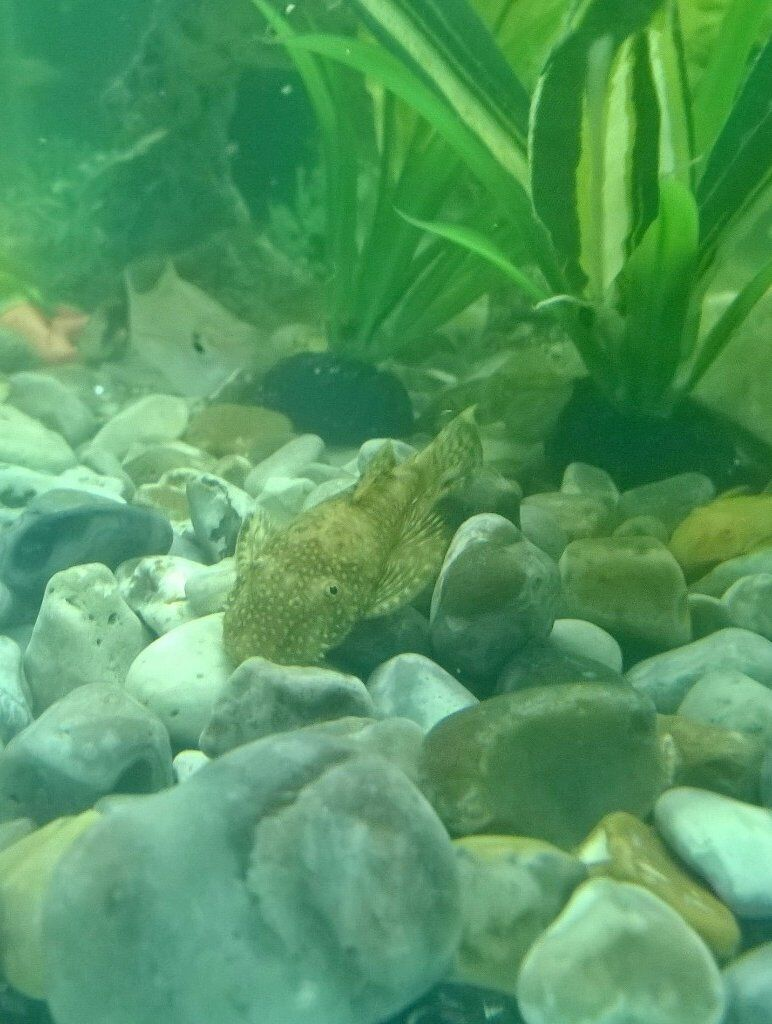 tropical fish sale | in Corby, Northamptonshire | Gumtree