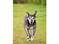 Dog photo shoots £20