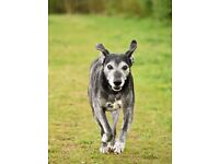 Dog Photo shoots