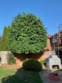 Tree surgeon Gardening and landscape Rubbish removal and demolition house clearance London