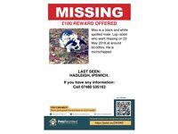Urgent! Missing Lop Bunny, Moo Reward for Finder
