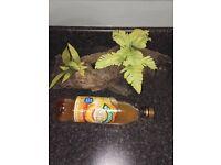 Fish tank decoration log/plant