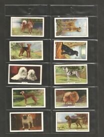 A Full set of 48 Original Vintage Collectable Cigarette Cards from the late 1930s Dog Breeds
