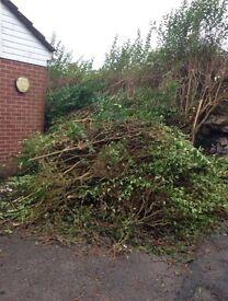 Tree clearances