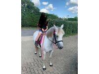Stunning 12.2hh Dapple grey mare