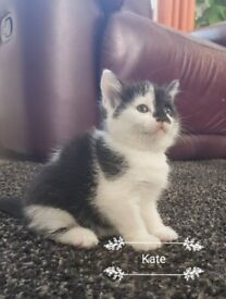 lovley kittens for sale