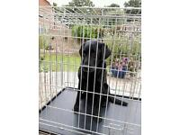Dog Crate -large.