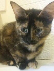 Missing Lost Kitten Brough Area. Tortie, she is microchipped.