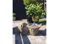 Indoor/outdoor wicker basket