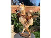 Unique Quirky Fox and Pheasant Taxidermy