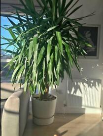 Wanted indoor plants