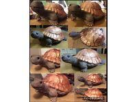 Handmade tortoises