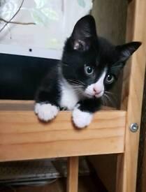 gorgeous Kitten seeking forever loving home