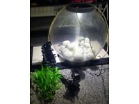 Biorb aquarium fish tank