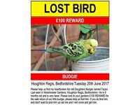 £100 REWARD please help find my daughters budgie Taylor