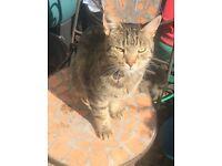 Lost Cat In Addiscombe