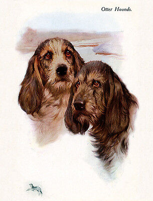 OTTERHOUND CHARMING DOG GREETINGS NOTE CARD, TWO DOGS HEAD STUDY