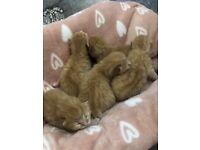 Kittens 5 boys