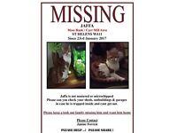 MISSING TOM CAT SINCE 23rd JAN. Reward for safe return!!!