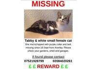 Missing tabby and white small female cat from SE20 8PJ