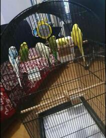 Birds Cages for Sale