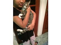 Loving kitten 5month old needs a home ASAP.