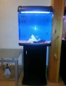 Fish tank. Cabinet. Tropical setup and tropical fish