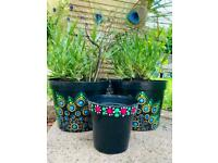 Pink spotted plant pots
