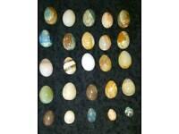 Job lot: Onyx Egg Ornaments & MORE