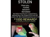 Missing Lost lovebird *1000 Reward*