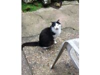 Missing Male Black And White Family Pet
