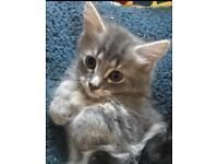 Gorgeous Kittens - ready now