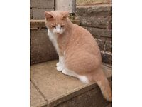 Male Neutered Cat aged 1.5 years