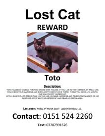 Missing Cat Fazakerley L10