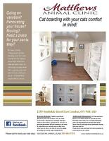 Cat Boarding with Your cats comfort in mind!