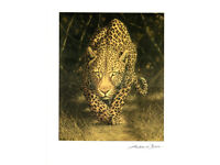 ANDREW BONE -AFRICAN MYSTIQUE, Print. Complete with 'Certificate of Authenticity'