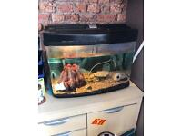 Fish tank and filters