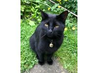 Cat missing since 03rd June around 2300.hes Black about 2yrs he's chipped and neutered