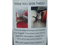 Missing tabby cat blurton