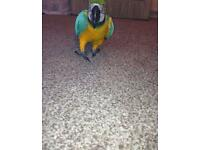 BLUE N GOLD MACAW PARROT INC CAGE N TOYS